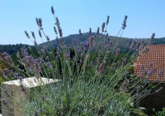 Medicinal herbs and plants from Croatia and Dubrovnik